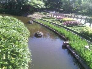 Brisbane garden 1
