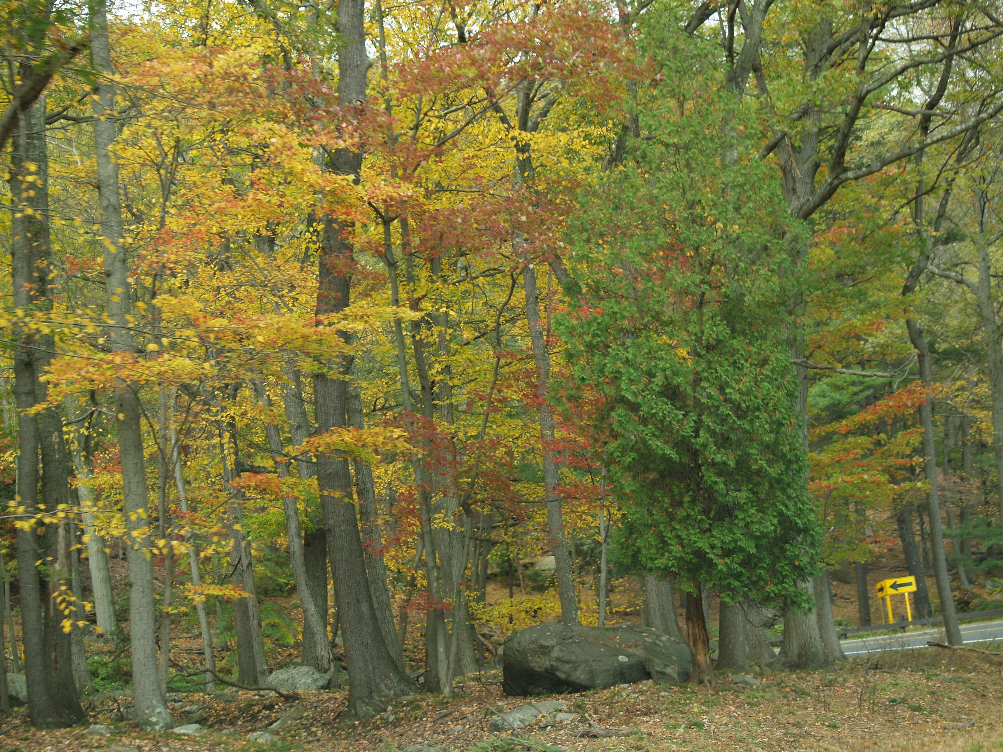 fabulous fall color at Bear Mountain NY